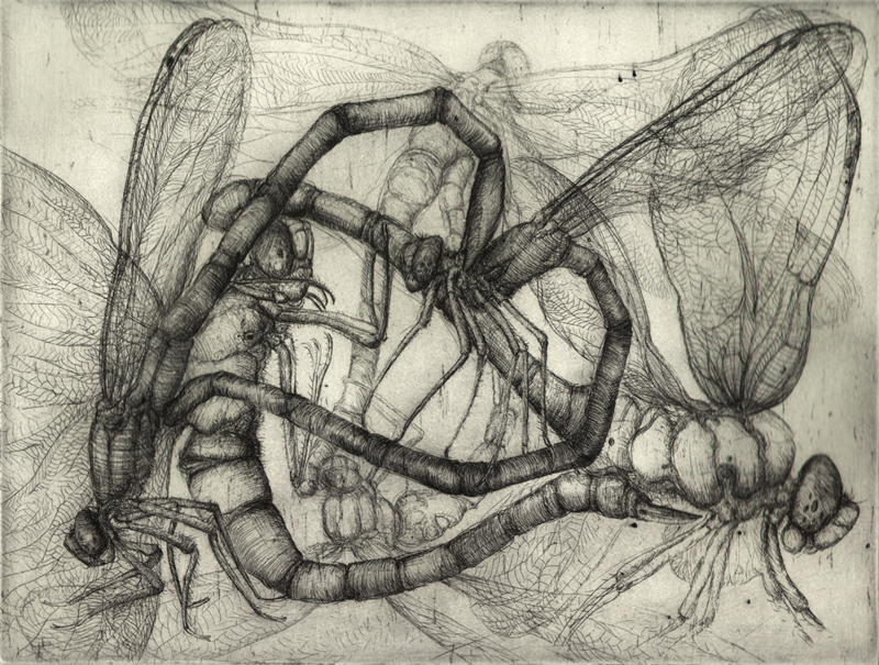 Dragonflies in love, Etching, 2011, 35x50 cm