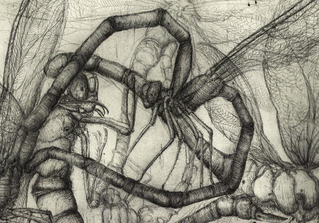 Dragonfies in love, Art print: etching, 2011, 35×50 cm