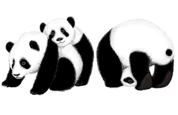 panda_web_2