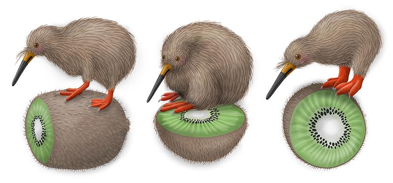 Kiwi rolling