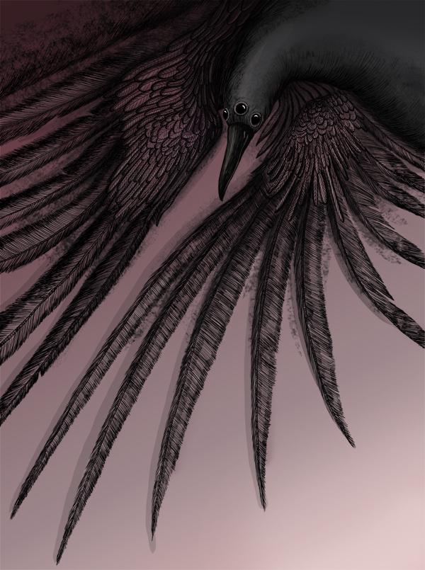 Crow_game of thrones illustration