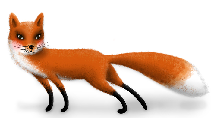 smart fox_drawing