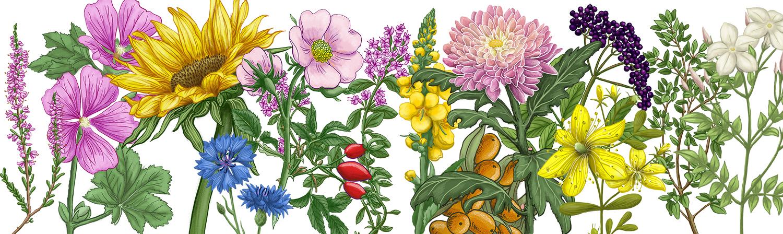 Herbal thumbnail_5